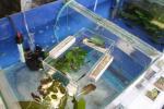 bourse aquariophilie